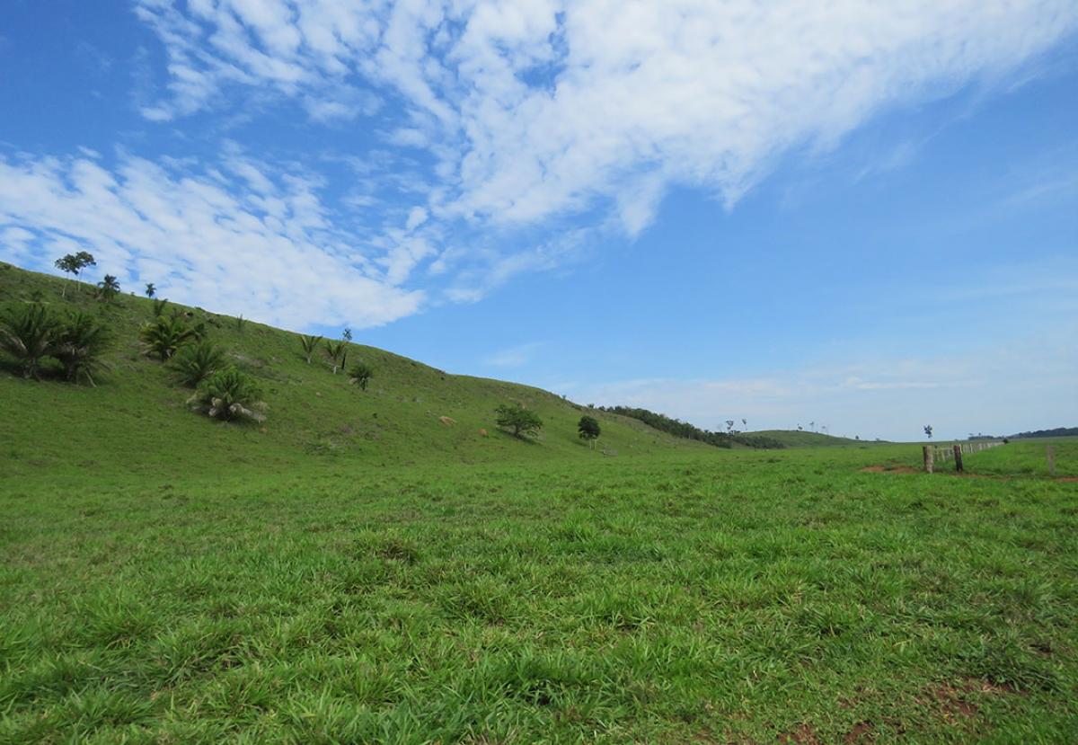 Pasto da fazenda Paredão I, em Vila Bela da Santíssima Trindade, oeste do Estado - Ministério Público