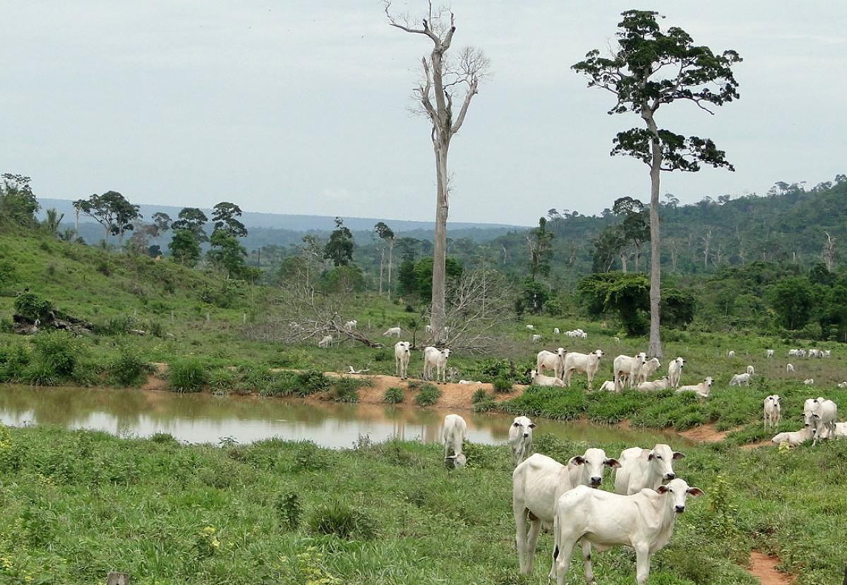 Imagens do Ministério Público Estadual mostram cabeças de gado pertencentes ao ministro Padilha - Ministério Público