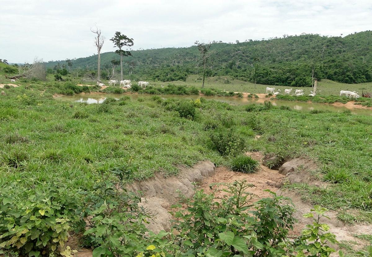 Pasto da fazenda Paredão I, em Vila Bela da SantíssimaTrindade, oeste do Estado - Ministério Público