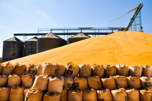 Estoque de milho a céu aberto por conta da falta de armazéns na cidade de Sinop, no Mato Grosso em 2013