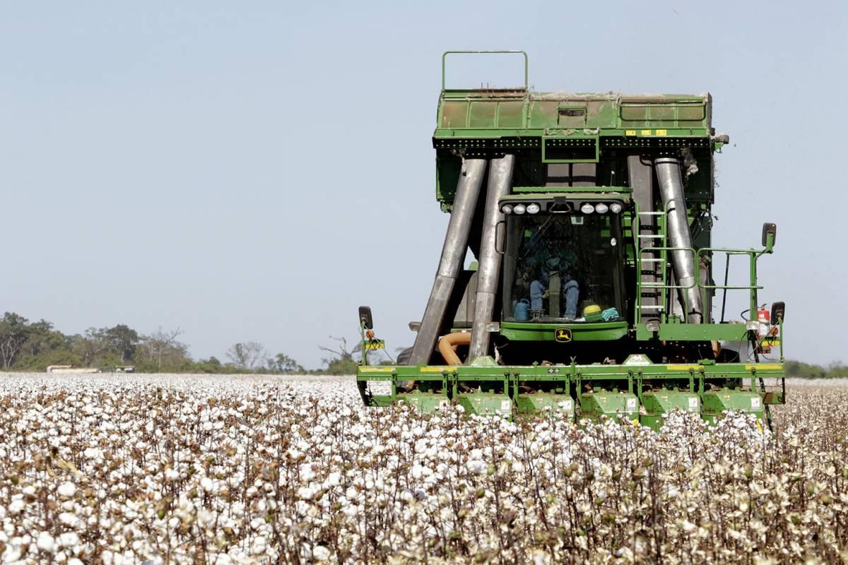 algodão, colheita - Ednilson Aguiar/O Livre