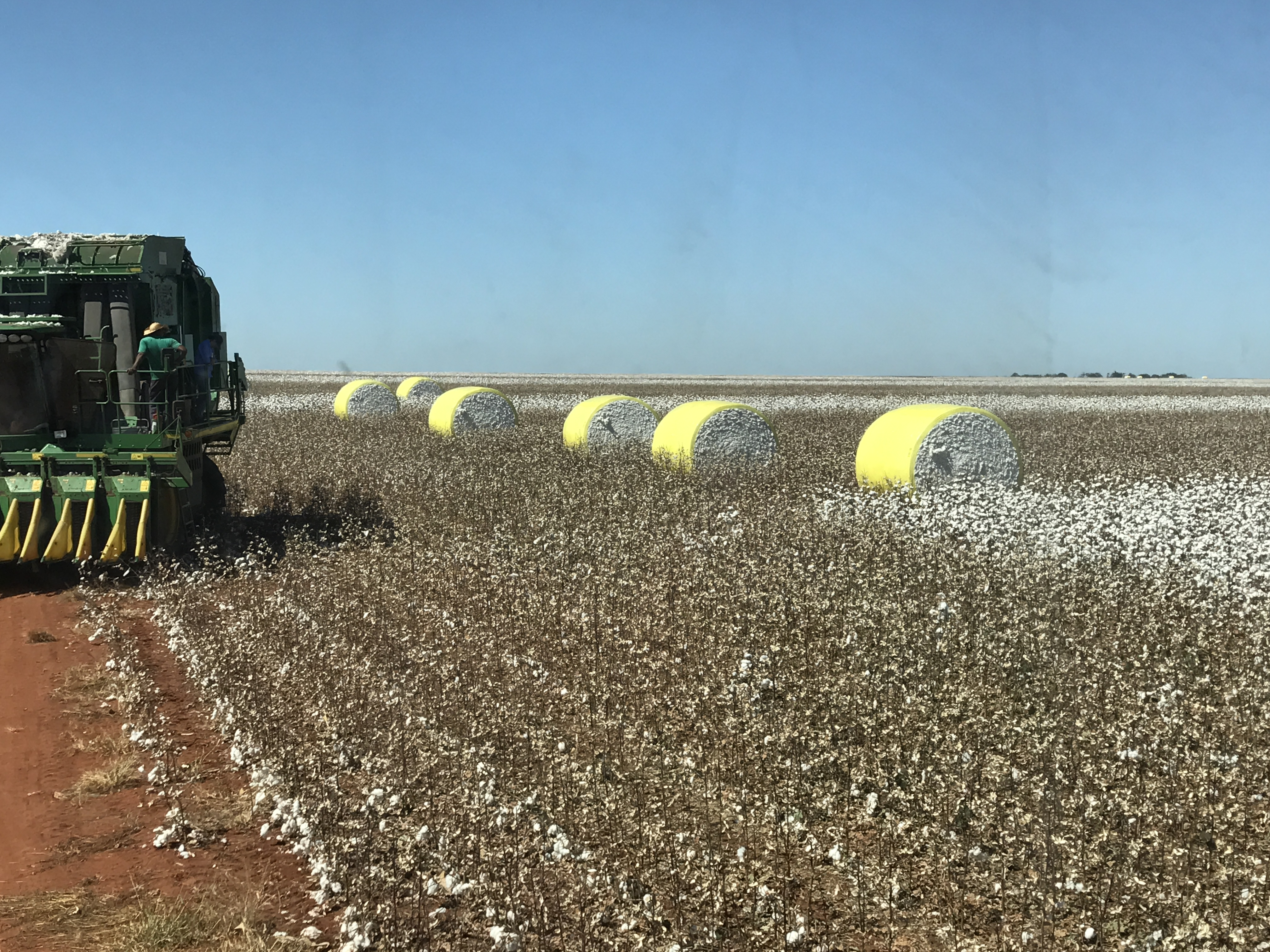 colhedora algodão máquina colheita
