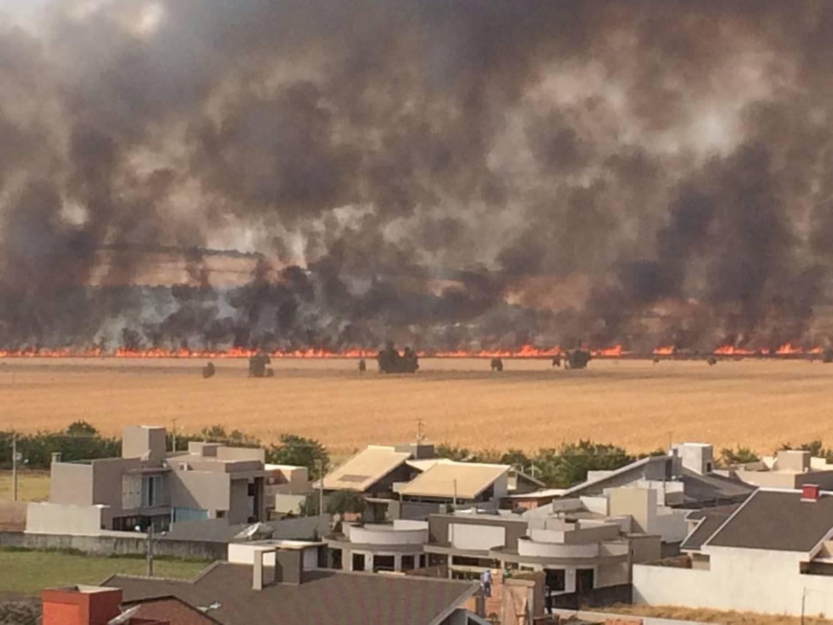 Incêndio destrói lavoura de milho em Mato Grosso do Sul  - Reprodução/Internet