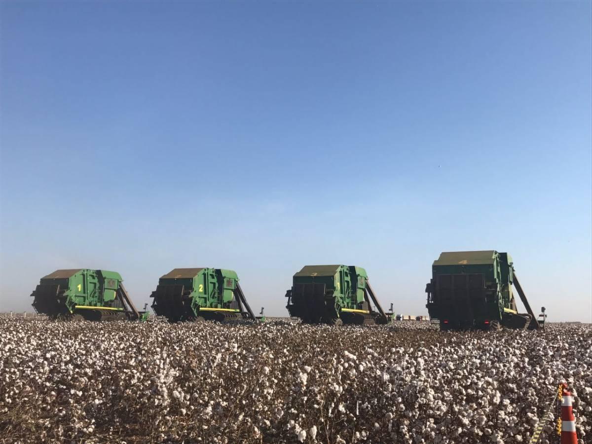 Presidente Michel Temer dá início de forma simbólica a colheita do algodão em Mato Grosso - Assessoria