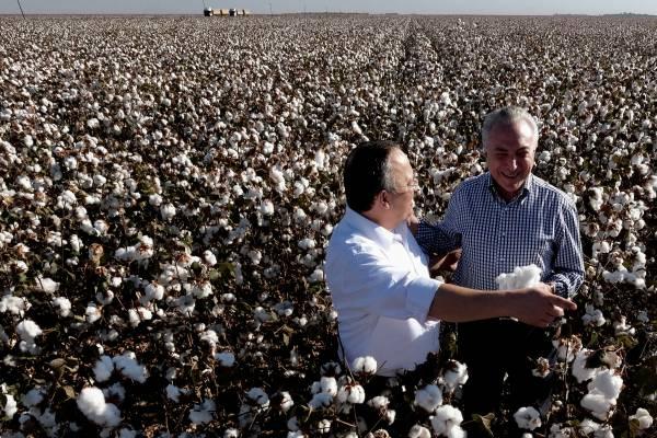 Taques e Temer na lavoura de algodão