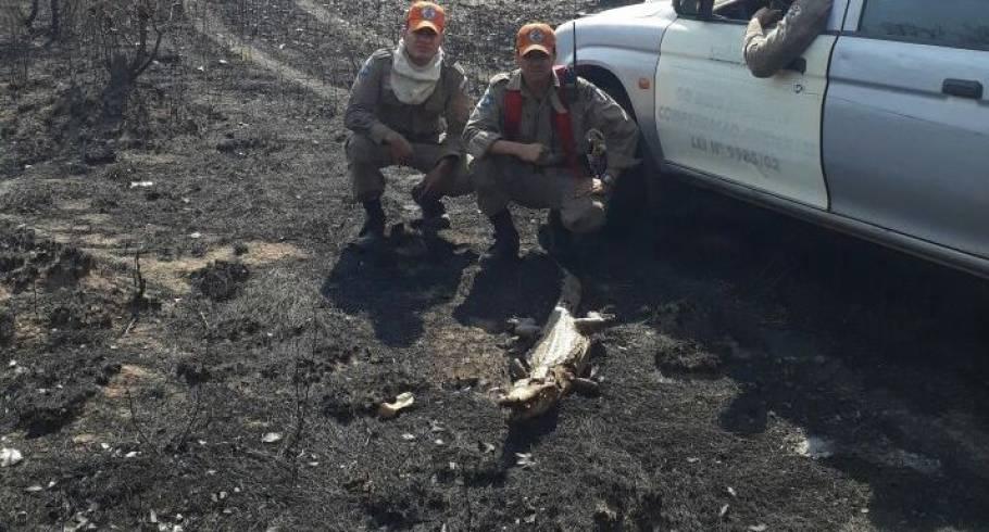 Animais morrem queimados em incêndio florestal